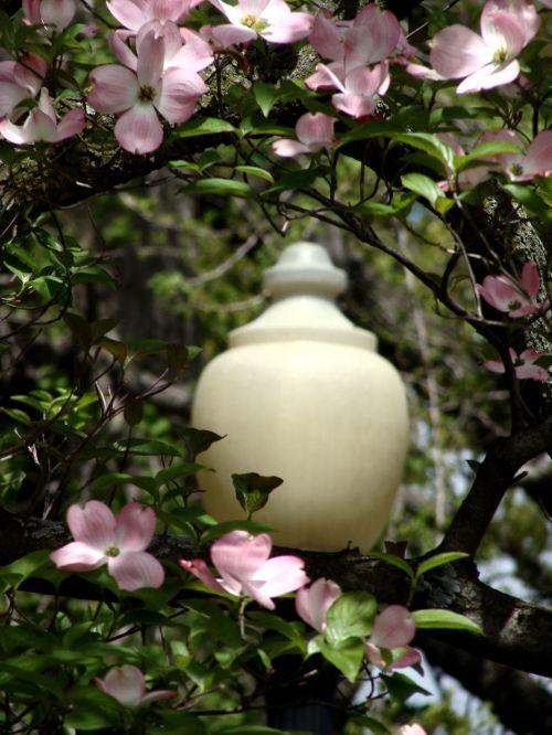 Boston Public Garden Street Light