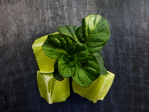 lime and apple mint