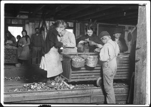 Little Lottie A Regular Oyster Shucker, Bayou, LA, 1911, by Lewis Hine