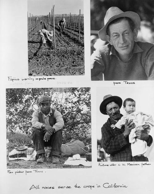 All races serve the crops in California, photo by Dorothea Lange, 1935