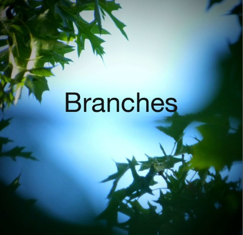 Branches Cover by Cynthia Staples