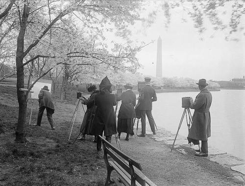 Photographers shooting cherry blossoms in Washington, D.C., 1922.