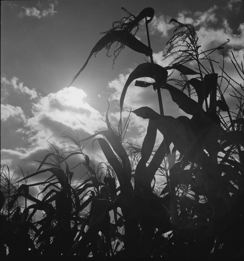 Photo by Joseph Anthony Horne, 1940s