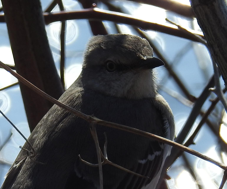 birdclose