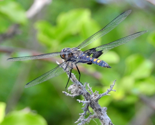 dragonflymystic