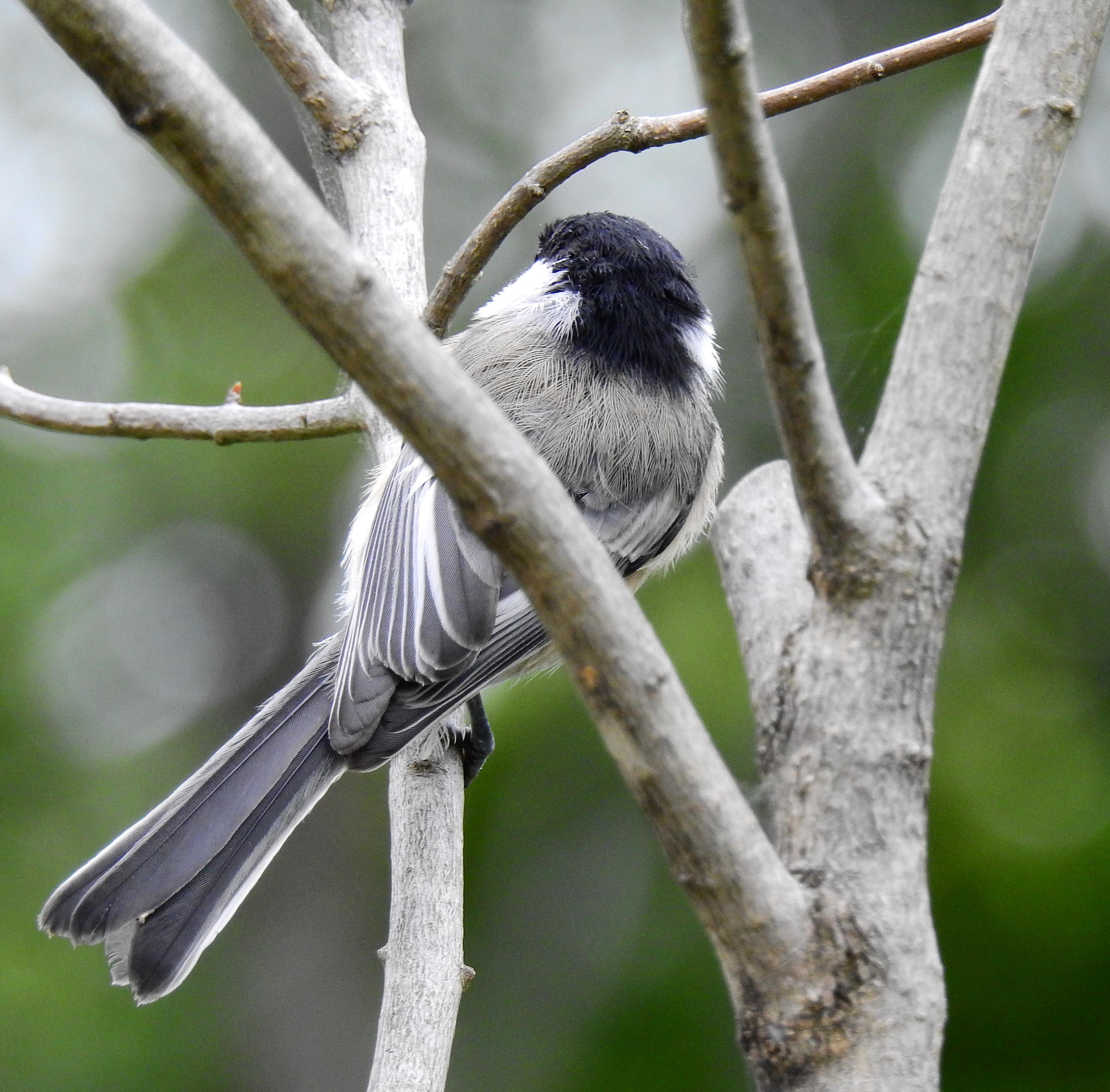 backofbird