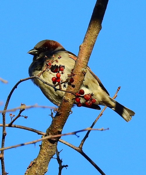 birdandberries