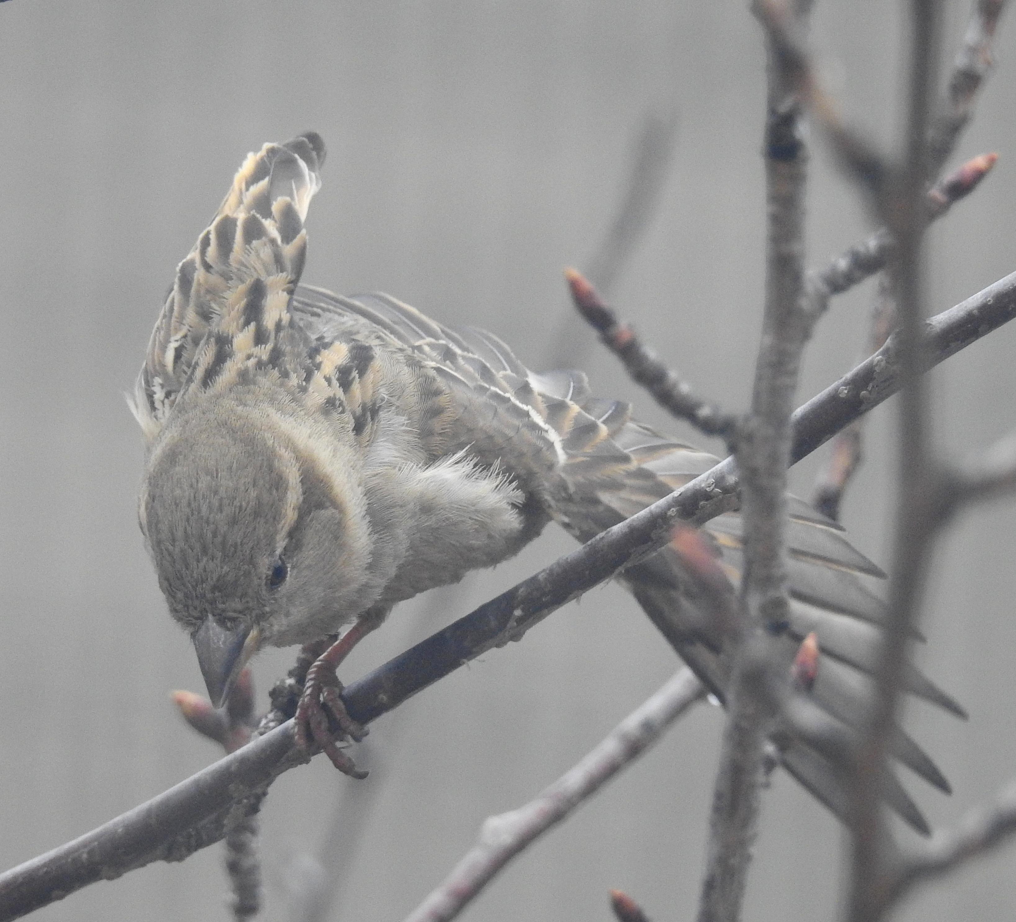 sparrowoutside