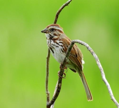 birdbranch1