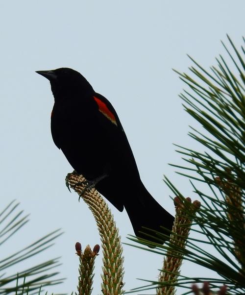 birdbranch3