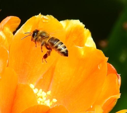 PollinatorAtWork3