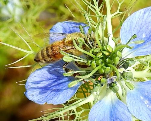 PollinatorAtWork4