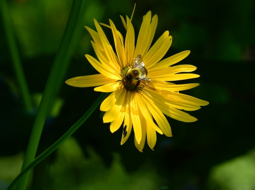 YellowFlowerBee