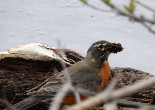 nesting1