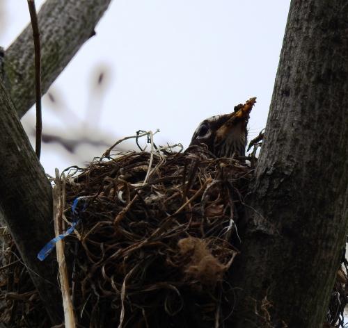 nesting3