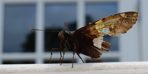 batteredbutterfly